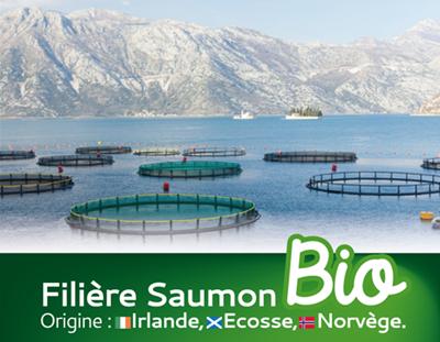 saumon-bio