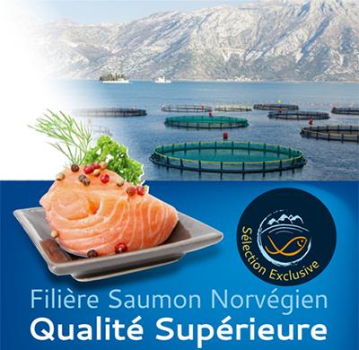 saumon-norv